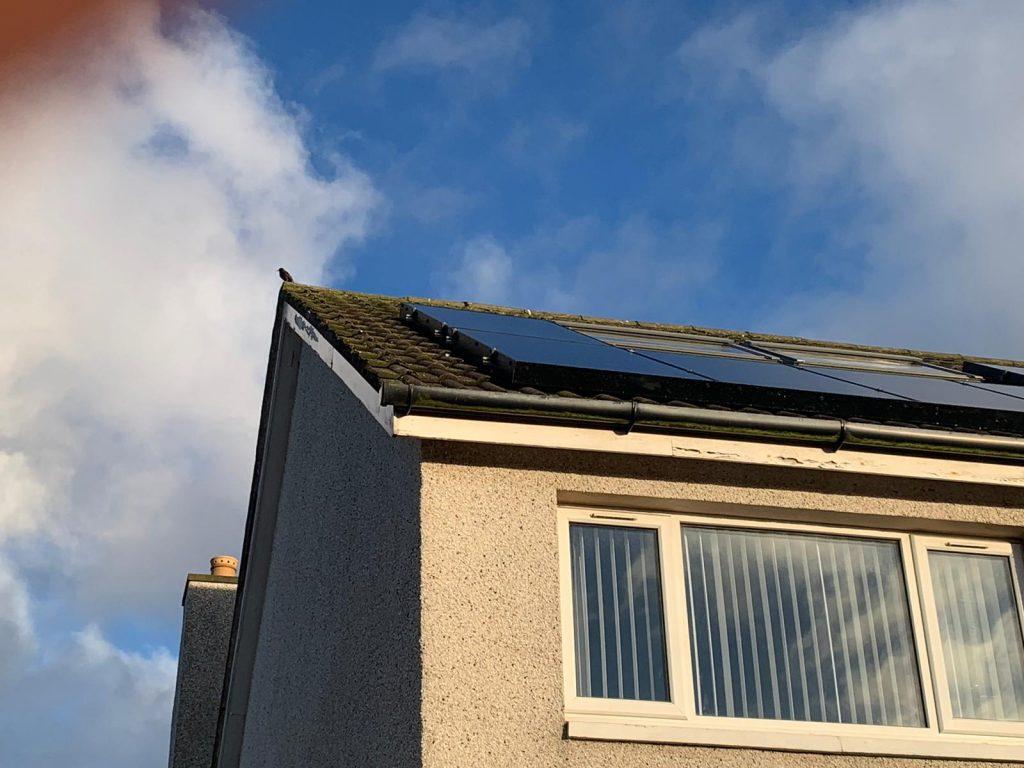 get rid of pigeons under solar panels Peterhead, Aberdeenshire