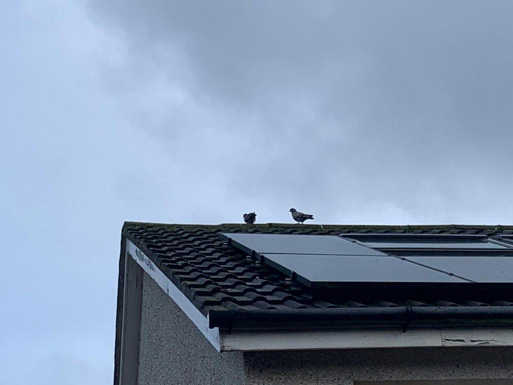 get rid of birds under solar panels Peterhead, Aberdeenshire